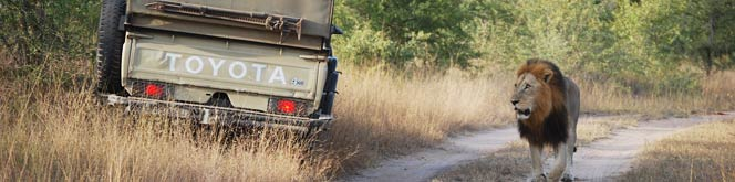 Safari Travel Vaccines