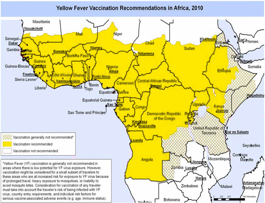 About Yellow Fever